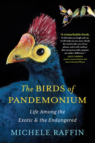2014-11-birds-of-pandemonium